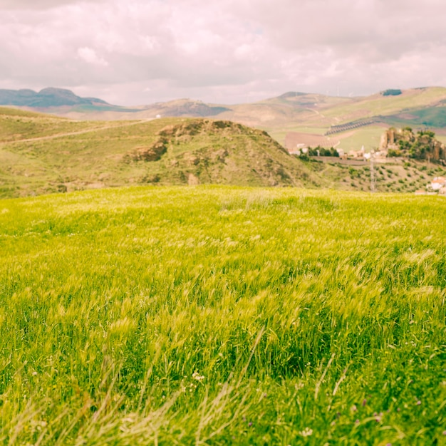 Campo verde brilhante na zona rural Foto gratuita