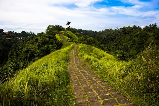 Campuhan ridge pista de caminhada em ubud, bali Foto Premium