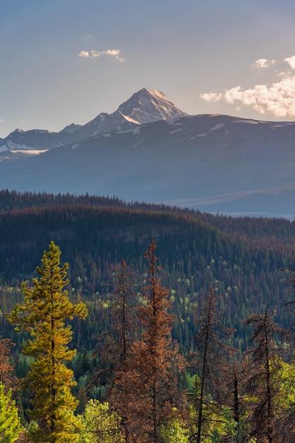 Canadá, floresta, paisagem, com, grande, montanha, em, a, fundo, alberta Foto Premium