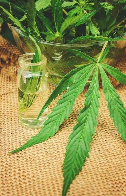 Cannabis erva e folhas para o caldo de tratamento, tintura, extrato, óleo. foco seletivo. Foto Premium