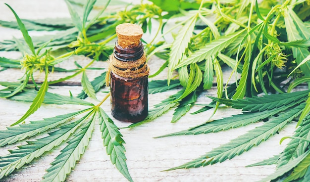 Cannabis erva e folhas para o caldo de tratamento, tintura, extrato, óleo. Foto Premium