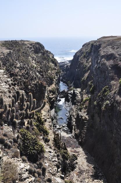 Canyon na praia de punta de lobos em pichilemu, chile em um dia ensolarado Foto gratuita