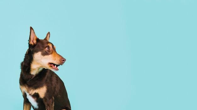 Cão à esquerda Foto gratuita