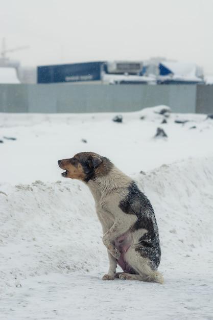 Cão abandonado pobre no desespero no inverno. Foto Premium