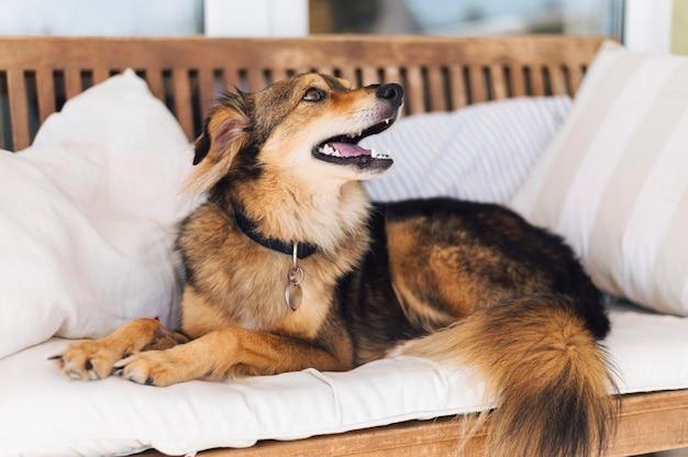 Cão adorável à procura de dono Foto gratuita