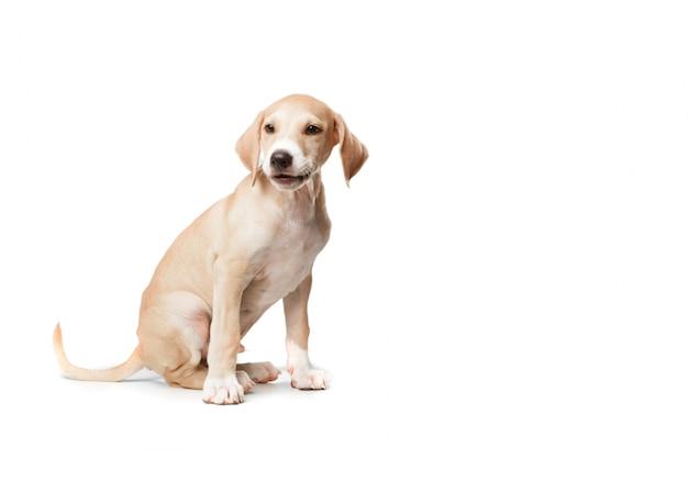 Cão assento louro de cabelos curtos Foto gratuita