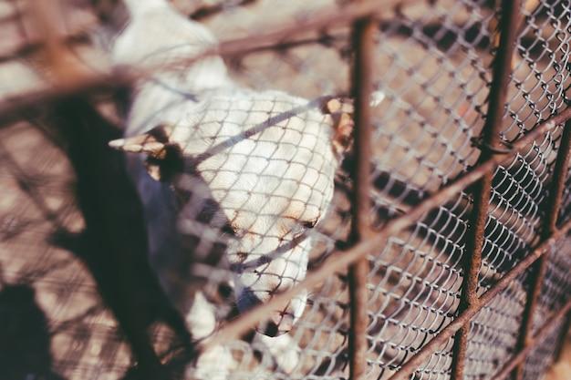 Cão atrás de uma cerca Foto gratuita