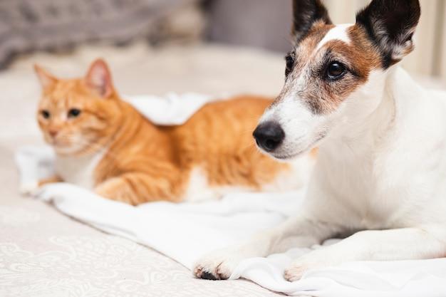 Cão bonito com amigo gato na cama Foto Premium