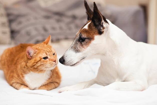 Cão bonito com amigo gato Foto Premium