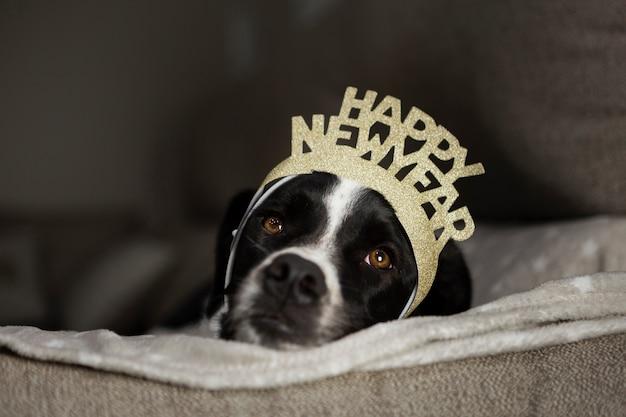 Cão bonito com coroa de feliz ano novo Foto gratuita