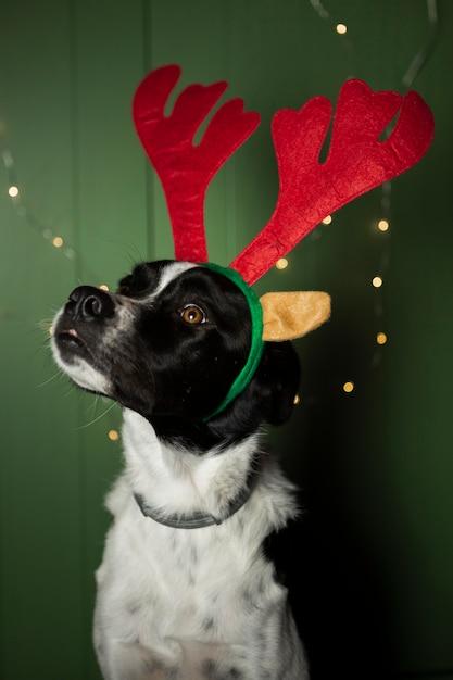 Cão bonito com orelhas de rena dentro de casa Foto gratuita
