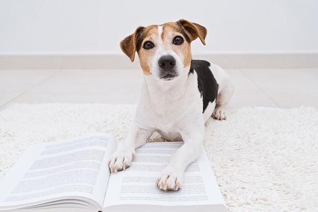 Cão bonito deitado com o livro aberto, olhando para a câmera Foto Premium