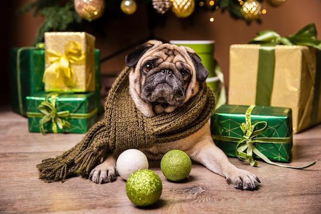 Cão bonito deitado na frente de presentes para o natal Foto gratuita