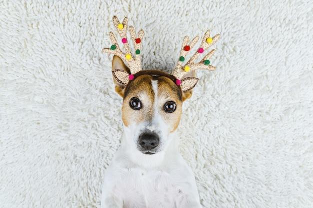 Cão bonito em chifres de veado de natal ouro Foto Premium