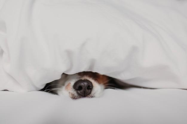 Cão bonito na cama em casa coberta com manta Foto Premium