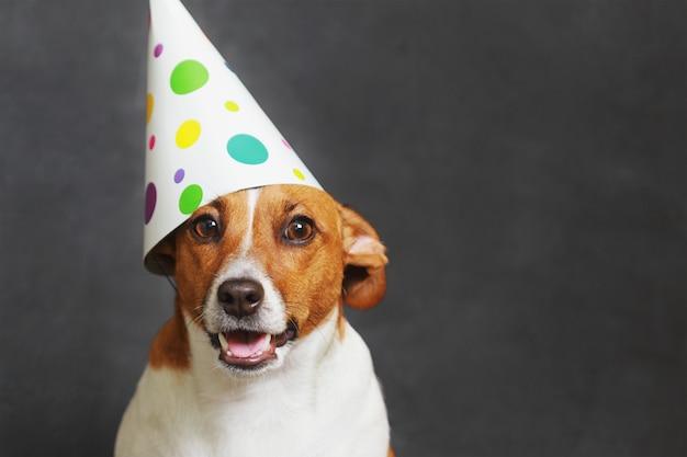 Cão bonito no chapéu de festa de carnaval Foto Premium