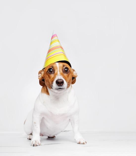 Cão bonito no chapéu do partido do carnaval que comemora o aniversário. Foto Premium