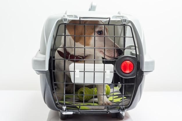 Cão bonito no transportador Foto gratuita