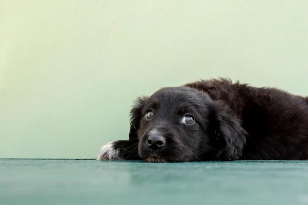 O que saber antes de adotar um cão