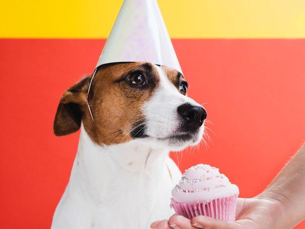 Cão bonito tratado com bolinho delicioso Foto gratuita