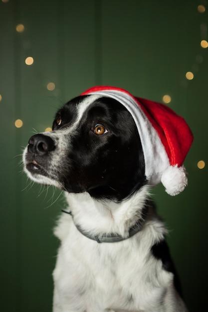 Cão bonito usando chapéu vermelho do papai noel dentro de casa Foto gratuita