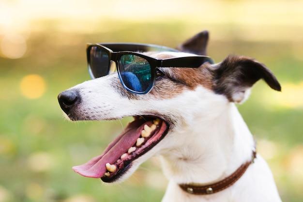 Cão bonito usando óculos de sol Foto Premium