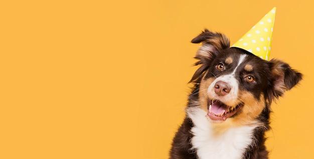 Cão bonito vista frontal com espaço de cópia Foto gratuita