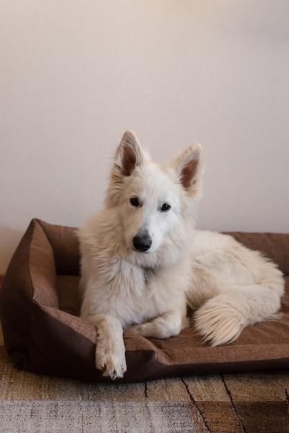 Cão branco deitado na cama do cão Foto Premium