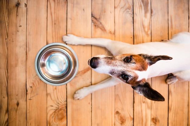 Cão com tigela de comida vazia Foto gratuita