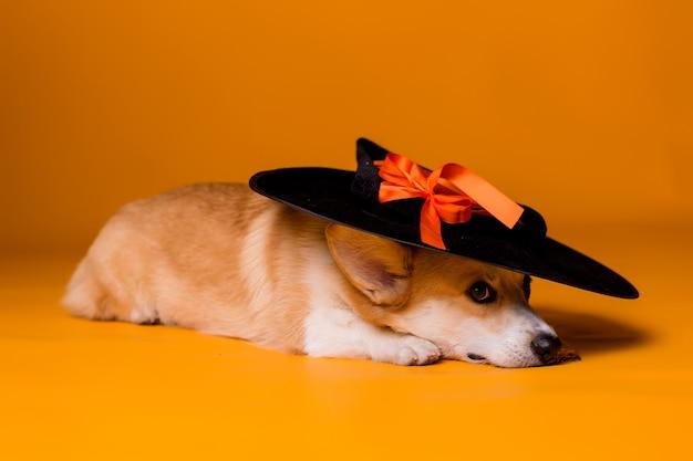 Cão corgi em traje de halloween Foto Premium