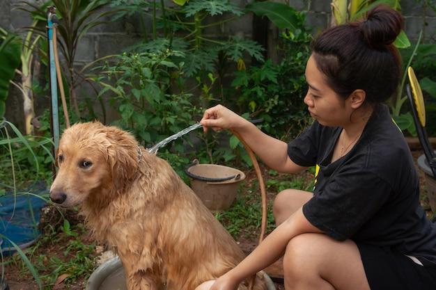 Cão de banho, uma mulher está tomando banho para seu cão golden retriever. Foto Premium