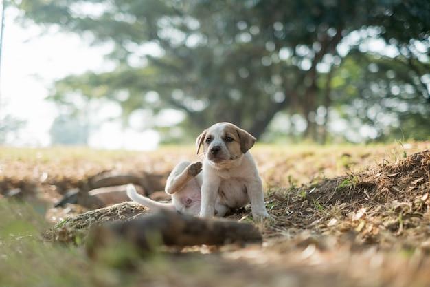 Cão de estimação arranhões atrás da orelha com as patas traseiras Foto Premium