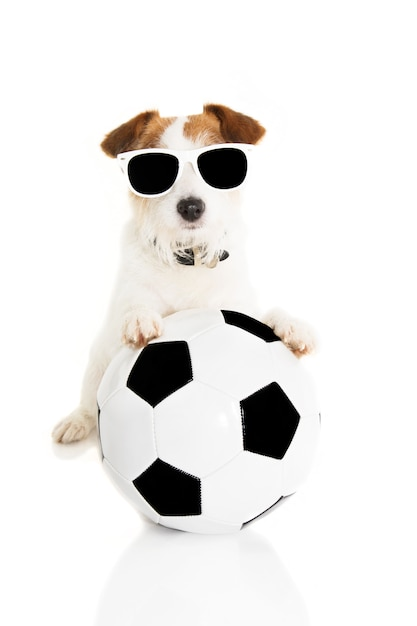 Cão de jack russell que joga com uma esfera de futebol. isolado Foto Premium