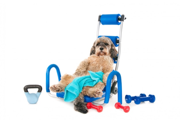 Cão de mestiços com toalha e equipamento desportivo, exausto após o treino. isolado no branco Foto Premium