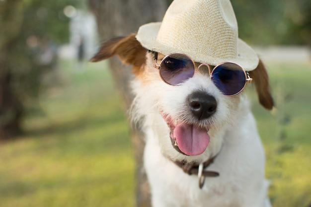 Cão de verão retrato Foto Premium