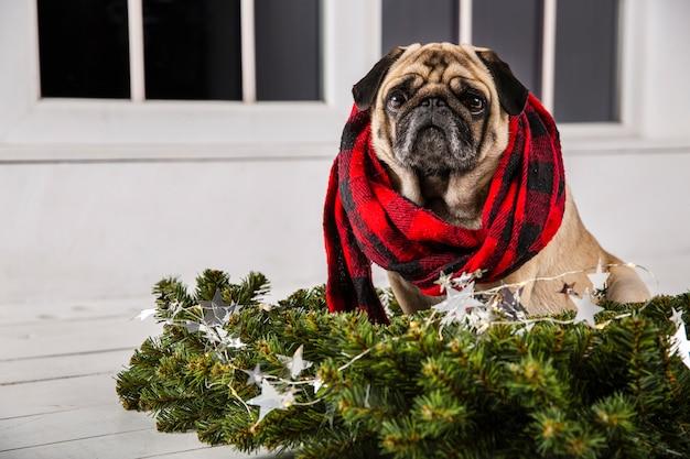 Cão de vista frontal com cachecol e decorações de natal Foto gratuita