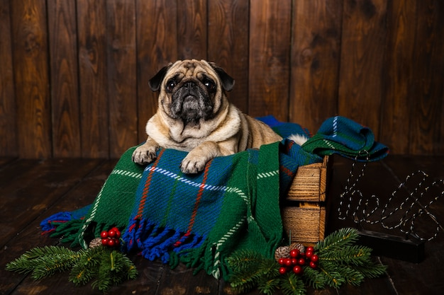 Cão de vista frontal no caixão de madeira com decorações de natal ao lado Foto gratuita
