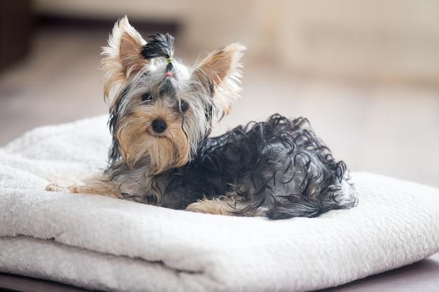 Cão deitado sobre uma toalha Foto gratuita