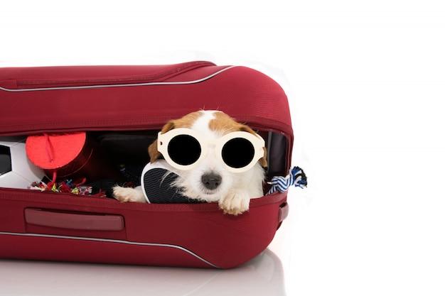Cão dentro de uma bagagem ou de uma bagagem moderna vermelha que vão nas óculos de sol desgaste. Foto Premium