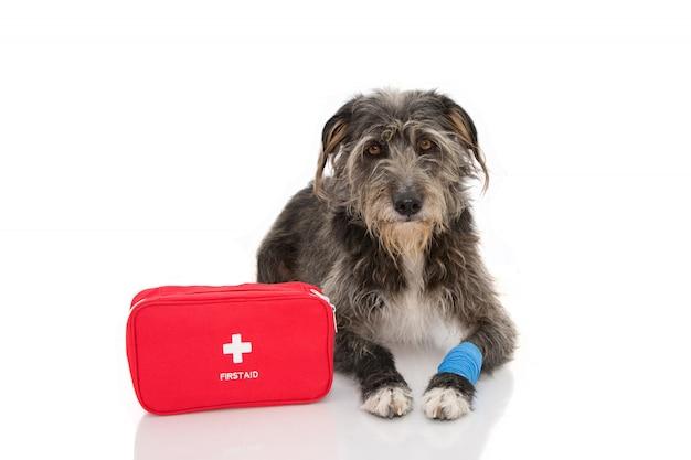 Primeiros Socorros para Cães: Aprenda a fazer um curativo simples no seu pet