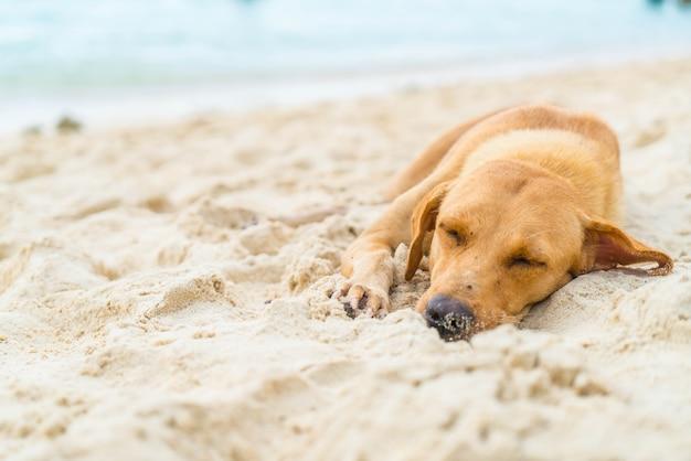 Cão dormindo na praia Foto Premium
