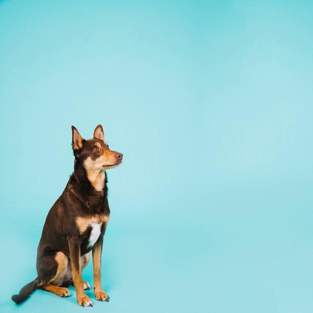 Cão e copyspace Foto gratuita