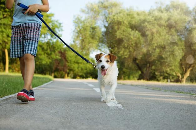 Cão e criança andando no parque. conceito de obediência e amizade. Foto Premium