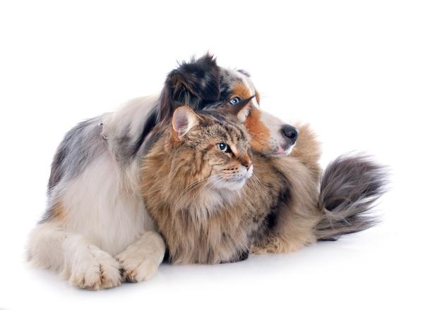 Cão e gato Foto Premium