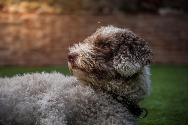 Cão e vespa Foto Premium