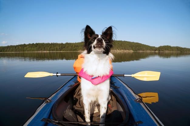 Cão em um colete salva-vidas flutuando no lago em um caiaque Foto Premium