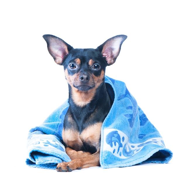 Cão em uma banheira, isolada. isolado. close-up bonito retrato de cachorro. conceito de adoção de procedimentos de spa Foto Premium