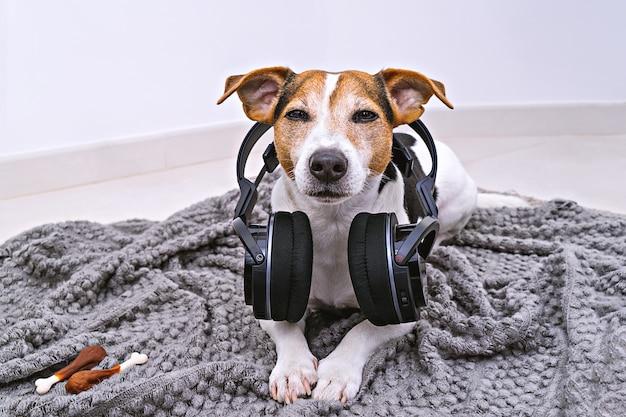 Cão encontra-se em fones de ouvido sem fio no cobertor Foto Premium