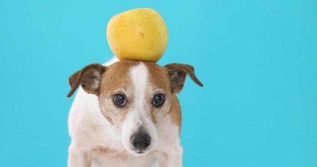 Cão engraçado com maçã amarela Foto Premium
