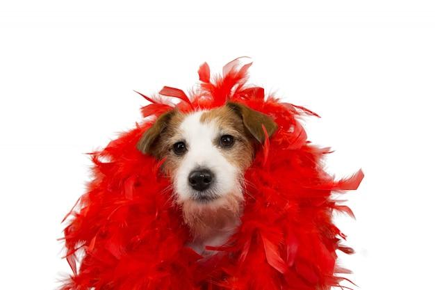 Cão engraçado no carnaval vermelho feerher boa do carnaval. Foto Premium